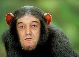becali maimuta