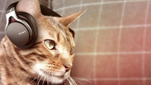casti sony pentru pisici
