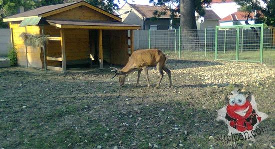 zoo oradea - cerb