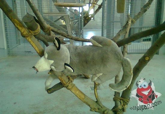 zoo oradea - plus