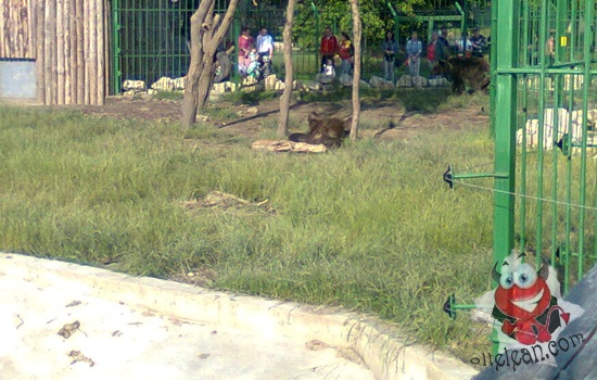 zoo oradea urs