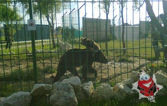 zoo oradea - ursi