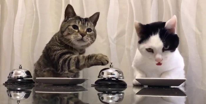 pisici suna din clopotel